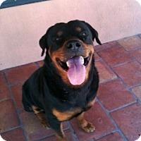 Adopt A Pet :: Red - Pembroke Pines, FL