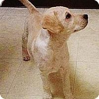 Adopt A Pet :: Cher - Silsbee, TX