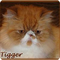 Adopt A Pet :: Tigger - Beverly Hills, CA