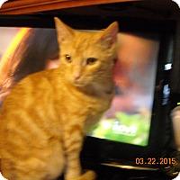 Adopt A Pet :: Byron - Riverside, RI