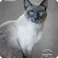 Adopt A Pet :: Blake - Phoenix, AZ