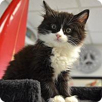 Adopt A Pet :: Zoe - Davis, CA
