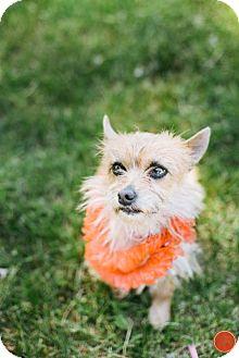 Terrier (Unknown Type, Medium) Mix Dog for adoption in Pueblo, Colorado - Honey