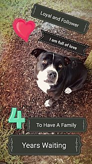 Pit Bull Terrier Mix Dog for adoption in Houston, Texas - Jenny