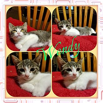 Domestic Shorthair Kitten for adoption in Warren, Michigan - Wendy