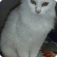 Adopt A Pet :: Aurora - Hamburg, NY