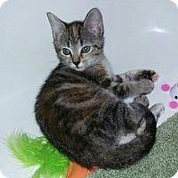 Adopt A Pet :: Sassy - Harrisburg, NC