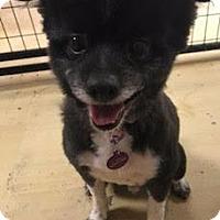 Adopt A Pet :: Buster - Valparaiso, IN