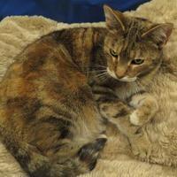 Adopt A Pet :: Swizzle - Port Charlotte, FL