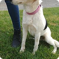 Adopt A Pet :: Heidi - Ogden, UT