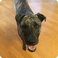 Adopt A Pet :: Apollo - Oviedo, FL
