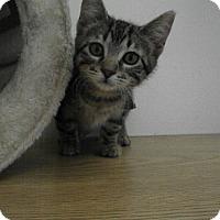 Adopt A Pet :: Haiku - Milwaukee, WI