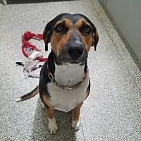 Adopt A Pet :: Jingles - Gunnison, CO