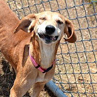 Adopt A Pet :: Katie - Albemarle, NC