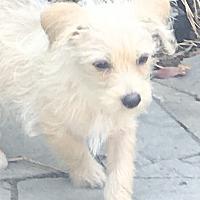 Adopt A Pet :: MacBeth - cupertino, CA