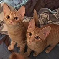 Adopt A Pet :: Stevie and Stewart - Twins! - Ephrata, PA