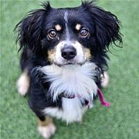 Adopt A Pet :: Bud - San Francisco, CA