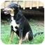 Photo 2 - Doberman Pinscher Mix Dog for adoption in Cincinnati, Ohio - Gil