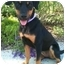 Photo 1 - Rottweiler Mix Puppy for adoption in El Cajon, California - BECKY