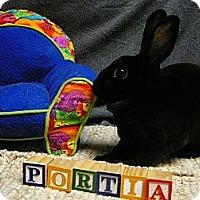 Adopt A Pet :: Portia - Newport, DE