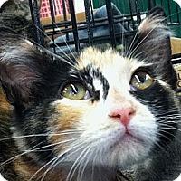 Adopt A Pet :: Mattie - Winchester, CA