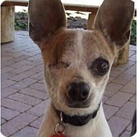Adopt A Pet :: Mattie - Chimayo, NM