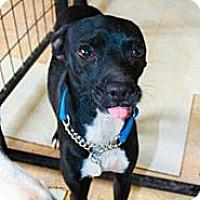Adopt A Pet :: Reggie - Spring Branch, TX