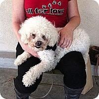 Adopt A Pet :: Sanders - Ojai, CA