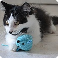 Adopt A Pet :: Gabby - Solon, OH
