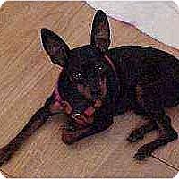Adopt A Pet :: Odie - Florissant, MO