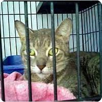 Adopt A Pet :: Gianna - Fort Lauderdale, FL