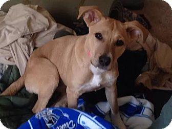 Collie/Hound (Unknown Type) Mix Dog for adoption in Sanford, North Carolina - Bonnie