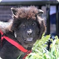 Adopt A Pet :: Teddy - Tucker, GA