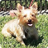 Adopt A Pet :: CARINA IN FL - Ponte Vedra Beach, FL