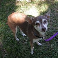 Adopt A Pet :: Stormee - Salt Lake City, UT