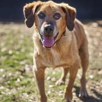 Adopt A Pet :: Barney - Ravenel, SC