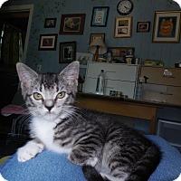 Adopt A Pet :: Raleigh - CARVER, MA