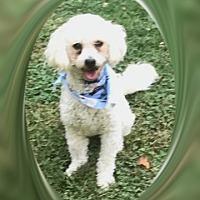 Adopt A Pet :: Winslow - MD - Tulsa, OK