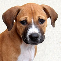 Adopt A Pet :: Floyd~adopted! - Southbury, CT