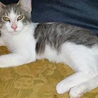 Adopt A Pet :: Ashton YOUNG MALE - Morehead, KY