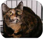 Domestic Shorthair Cat for adoption in Englewood, Florida - Tammy