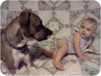 Pit Bull Terrier Mix Dog for adoption in Seneca, South Carolina - Tipper