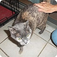 Adopt A Pet :: Emmy - Sun City Center, FL