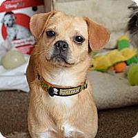 Adopt A Pet :: Mr. Snuggles - Westfield, IN