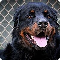 Adopt A Pet :: Noah - Santa Barbara, CA
