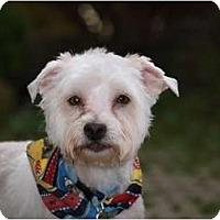 Adopt A Pet :: Winston - Toronto/Etobicoke/GTA, ON