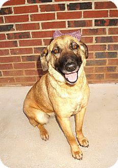 Shepherd (Unknown Type) Mix Dog for adoption in Lexington, North Carolina - Kenly