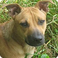 Adopt A Pet :: Butternut - Portland, ME