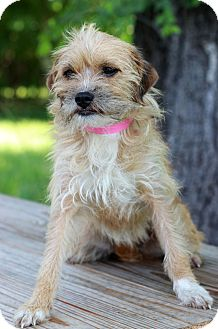 Terrier (Unknown Type, Small) Mix Puppy for adoption in Waldorf, Maryland - Eva