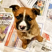 Adopt A Pet :: Xena*ADOPTED!* - Chicago, IL